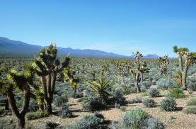 desert thrive in hurt