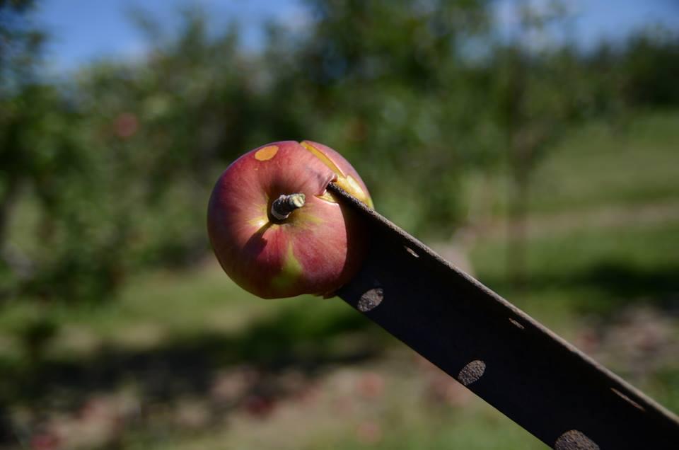 pride apple