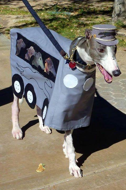 Greyhound Humor