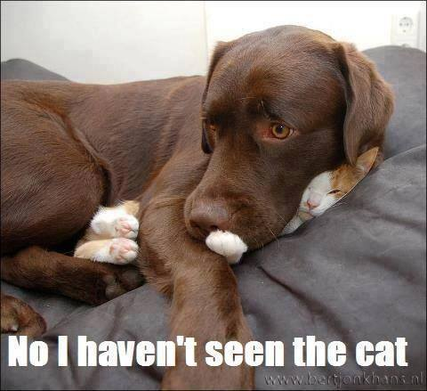 funday friday animal humor cornerstone family services