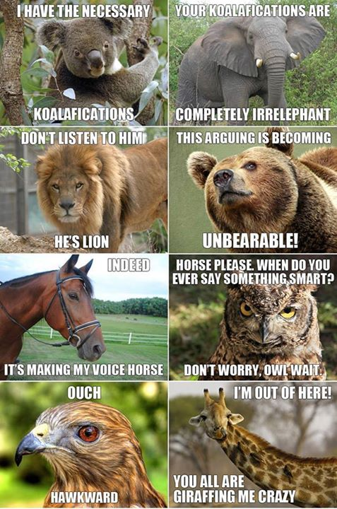 animal punny humor conversation