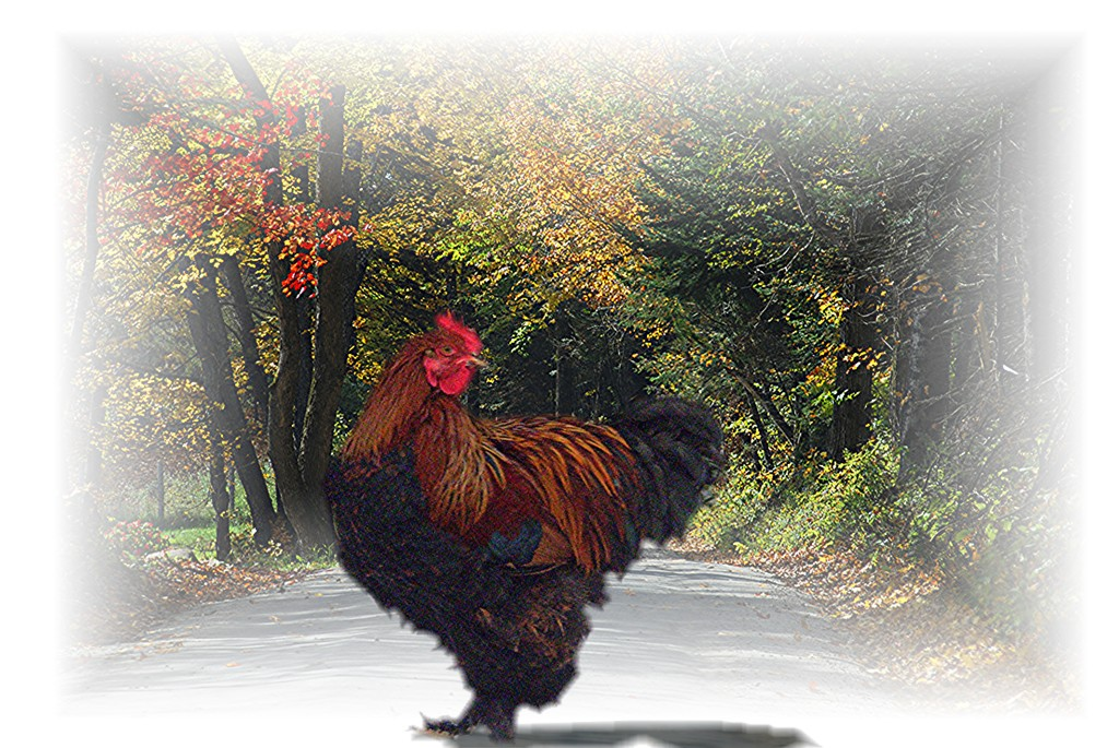 chicken road