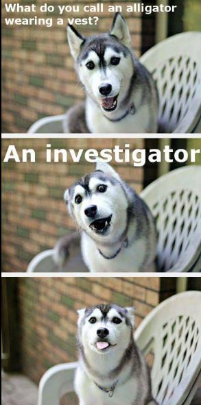 dog-vest-humor