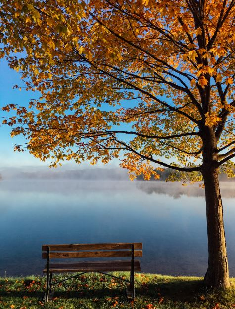 date-nature-bench-tree